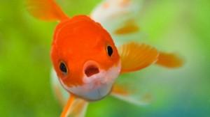 pescado podrido2