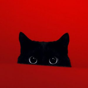 rojo el gato negro
